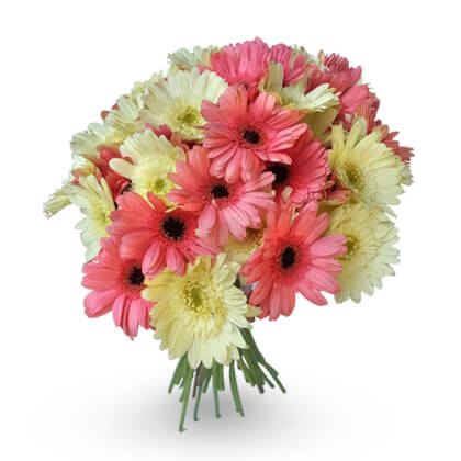 Glowing Gerberas - florista-in