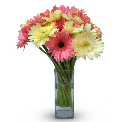 Gorgeous Gerberas - florista-in