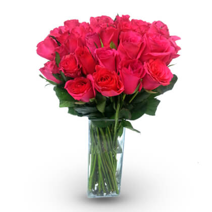 Vibrant Pink Roses - florista-in