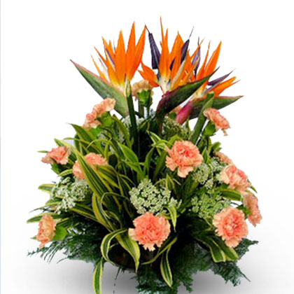 Birds Of Paradise - florista-in