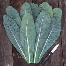 Load image into Gallery viewer, Kale - Black - Organic Family Farm