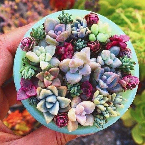 Mix of popular cacti & succulent plant seeds (100 seeds)