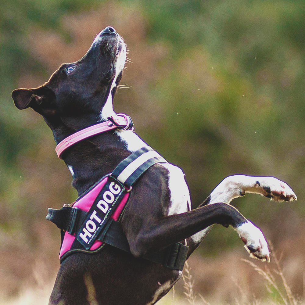 No-Pull Dog Harness - Wowza Store Pet Products Online Dog Accessories for Dogs, Pets and Cats