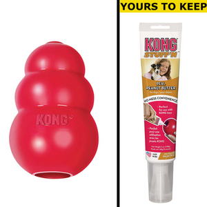 Kong (Large) - Treat & Meal Dispenser