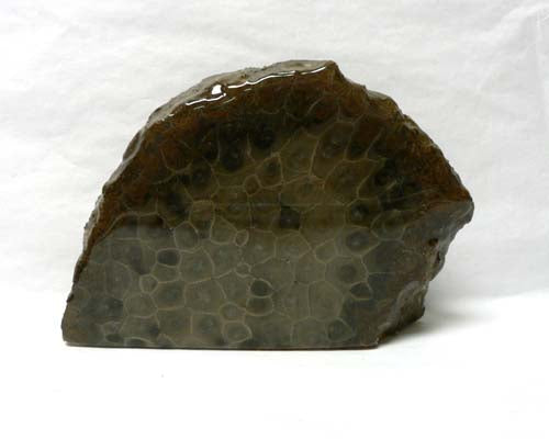 Petoskey Stone Small Endcut Decorators