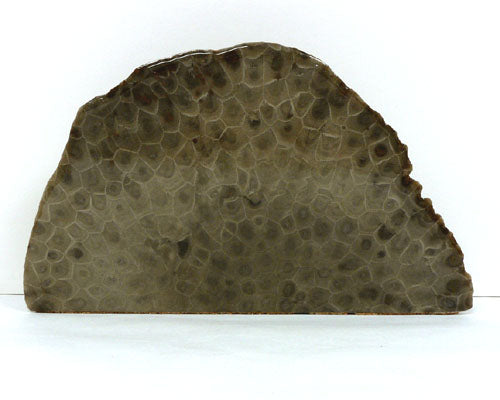 Petoskey Stone Large Endcut Decorator