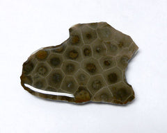 Petoskey Stone Slabs - 24pc flat