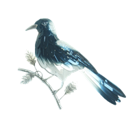 Magpie wall hanging