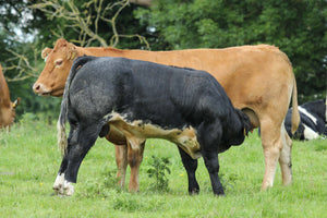 3 day Irish agriculture technical study farm and agri tour (May 20th, 21st and 22nd)