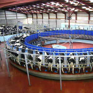 Dairymaster Rotary Robotic Milking Farm Tour