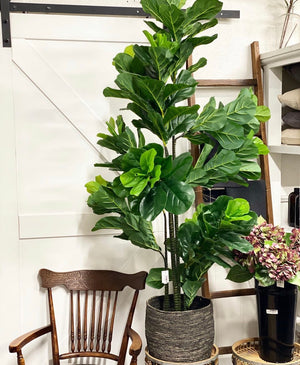 1.75cm Fiddle Leaf Tree