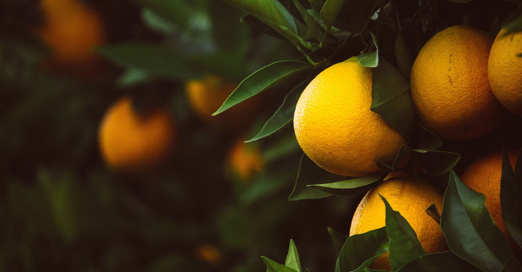 Ingredients In Focus: Sweet Orange Essential Oil