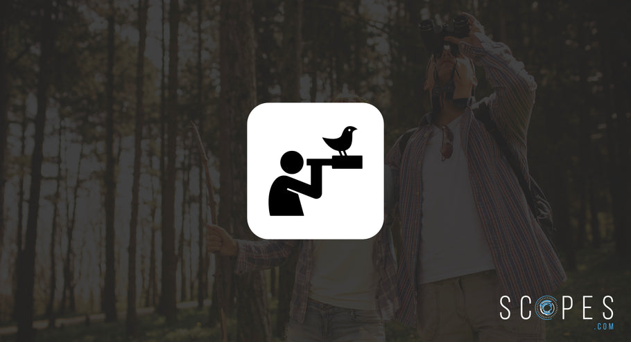 All the Knowledge and Gear You Need to Start Birdwatching