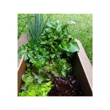 Palmy Salad Box