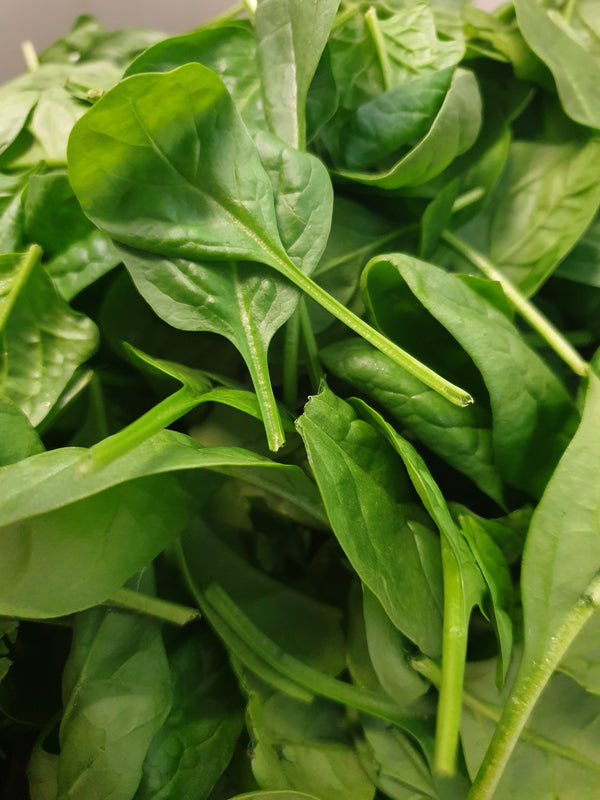Spinach, baby leaf, bag 1kg