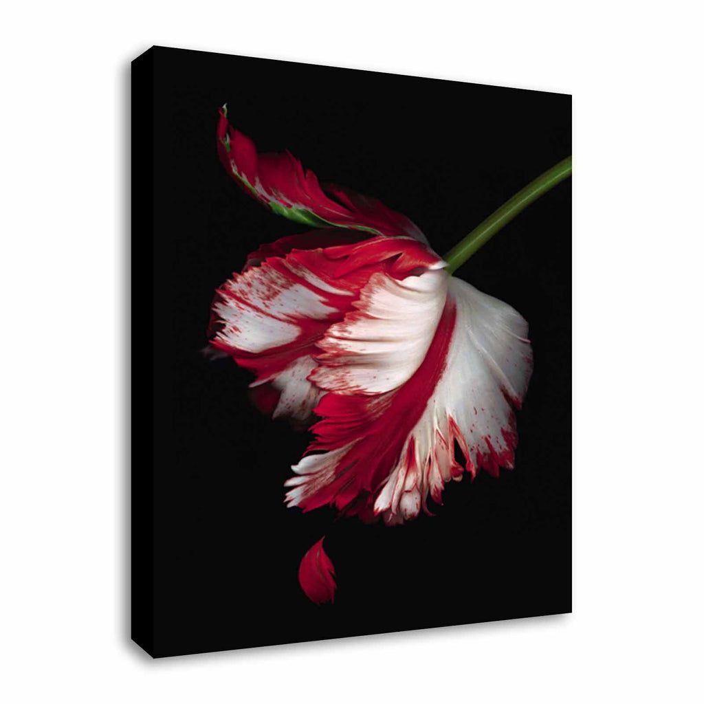 Twilight New Moon Book Cover Canvas Wall Art Picture Print
