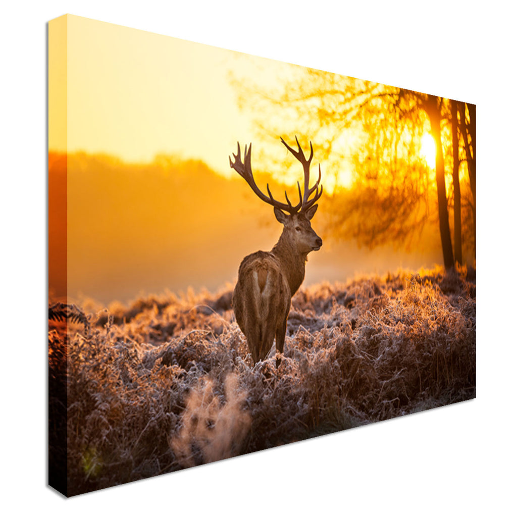 Red Deer in Morning Sun Canvas Wall Art Picture Print