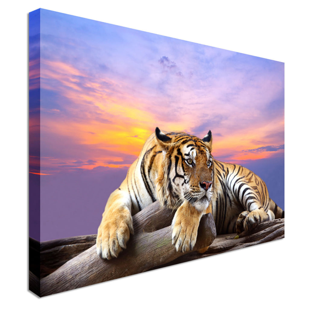 Tiger at sunset time - Canvas Wall Art Picture Print