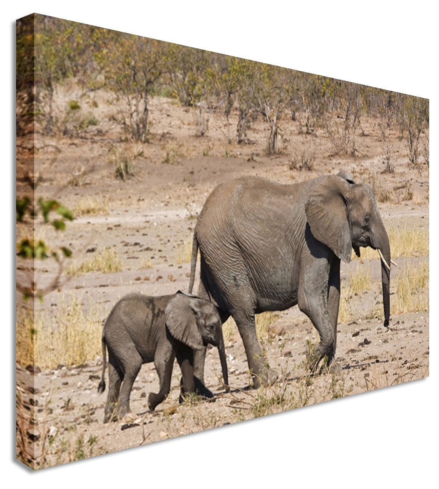 Wall Art - Elephant Mother Care - Canvas Wall Art Picture Print