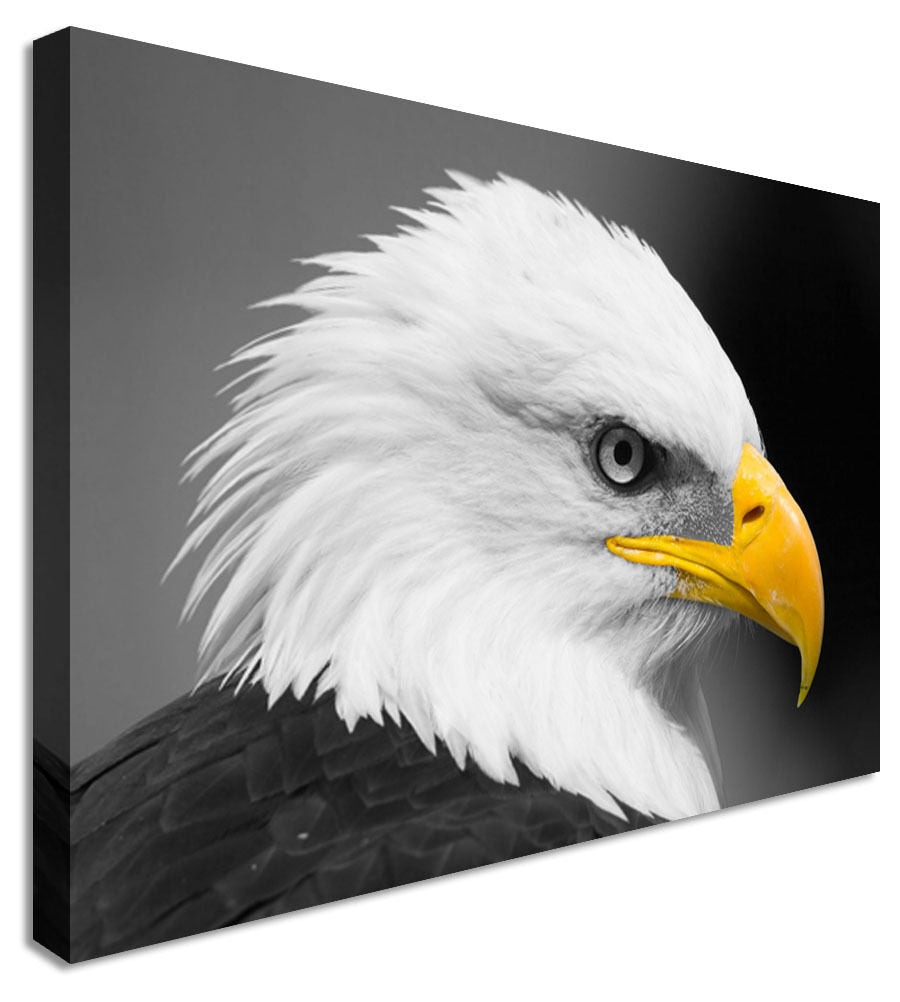 Wall Art Large Animal Bald Eagle Canvas Wall Art Picture Print