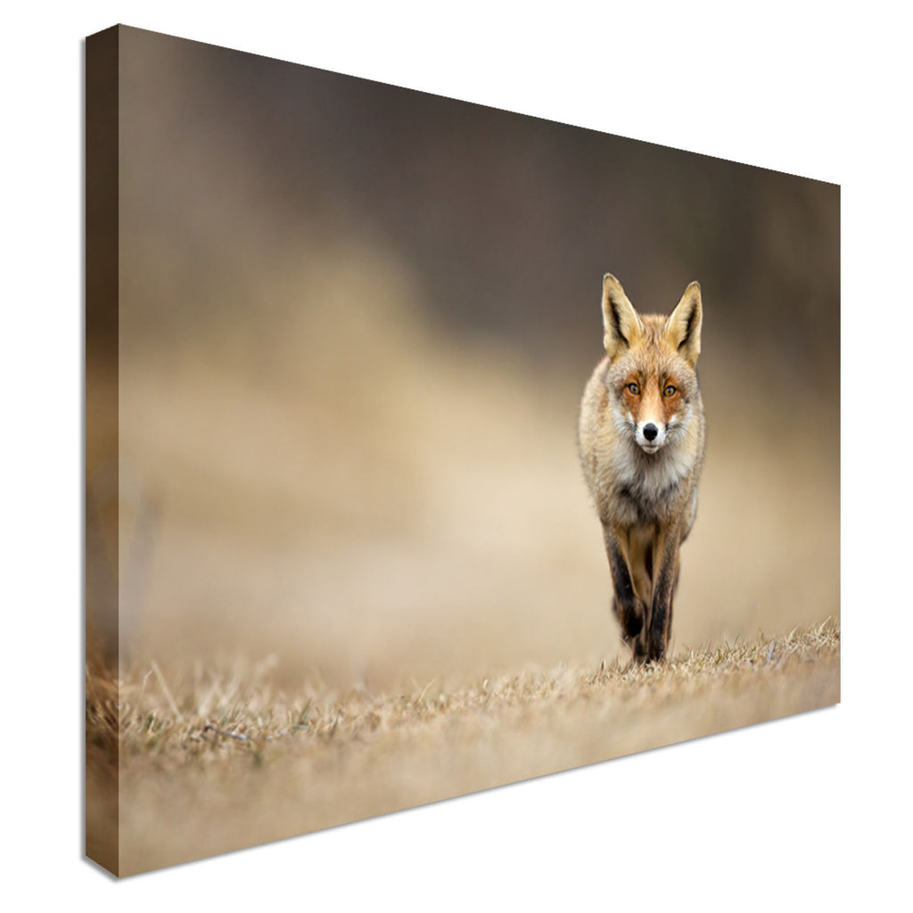 Crafty Red Fox Canvas Art Canvas Wall Art Picture Print