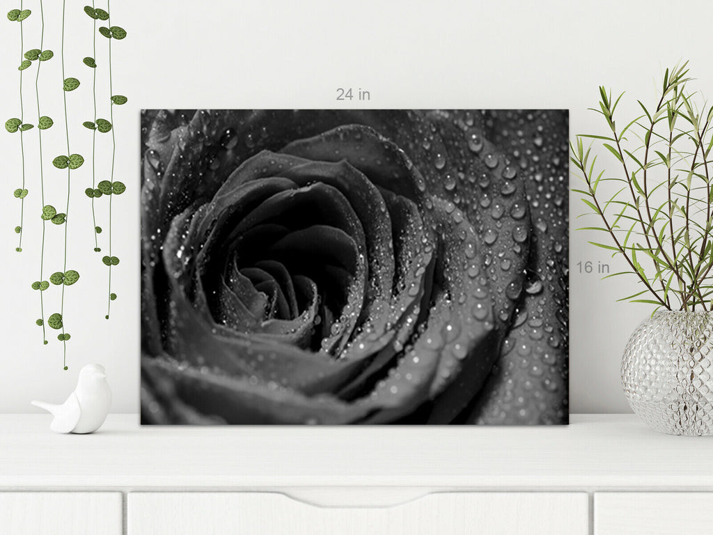 Black and White Rose Droplets  Canvas Wall Art Picture Print