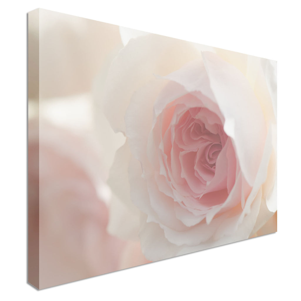 Soft Pink Wedgwood Rose Canvas Wall Art Picture Print