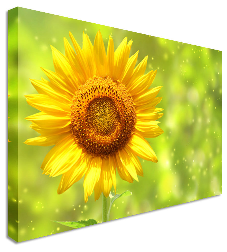 Sunflower Green Field Canvas Wall Art Picture Print