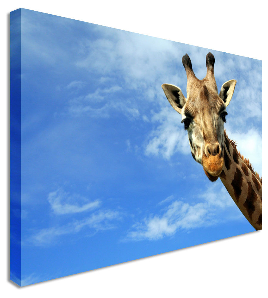 Giraffe Peek A Boo Canvas Wall Art Picture Print