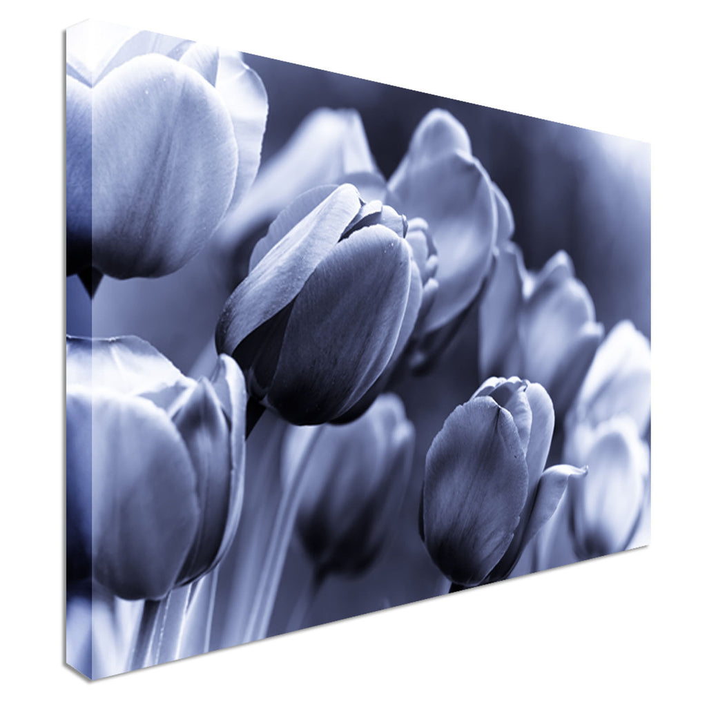 Violet / Blue Tulips - Canvas Wall Art Picture Print