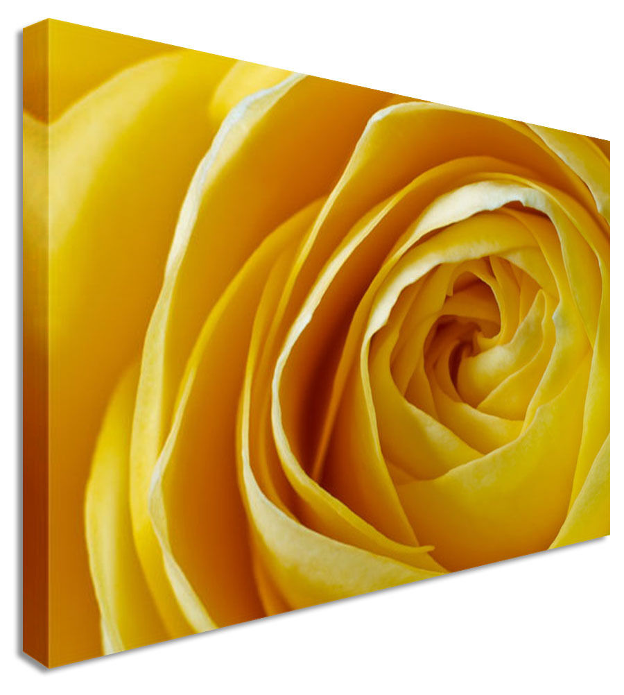 Yellow Love Rose Floral Flower Canvas Wall Art Picture Print