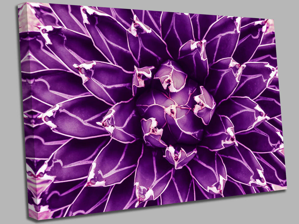 Cactus, abstract natural pattern violet Canvas Wall Art Picture Print