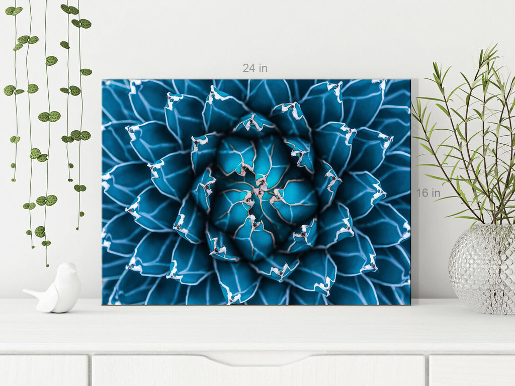 Plant cactus, abstract natural pattern Canvas Wall Art Picture Print