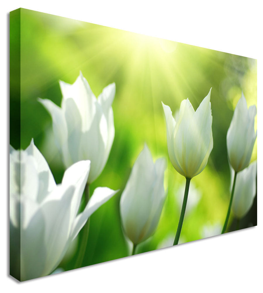Bright White Tulips Garden Floral Flower Canvas Wall Art Picture Print