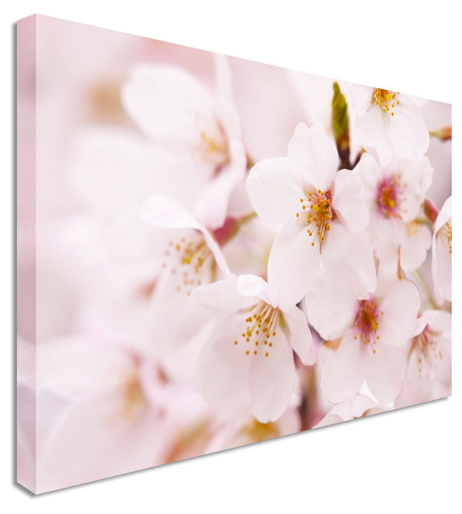 Pink Orchid Tree Floral Flower Canvas Wall Art Picture Print