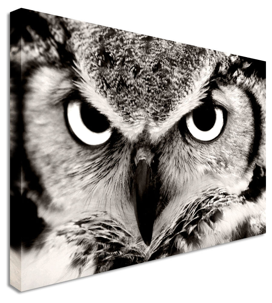 Wall Art Large Animal Owl Stare Canvas Pictures