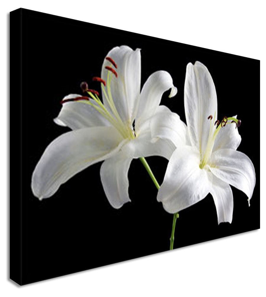 Two Lillies Floral Flower Canvas Wall Art Picture Print