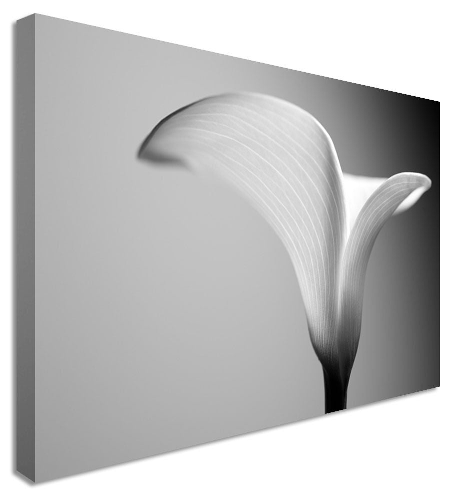 Beautiful Calla Lilly - Canvas Wall Art Picture Print