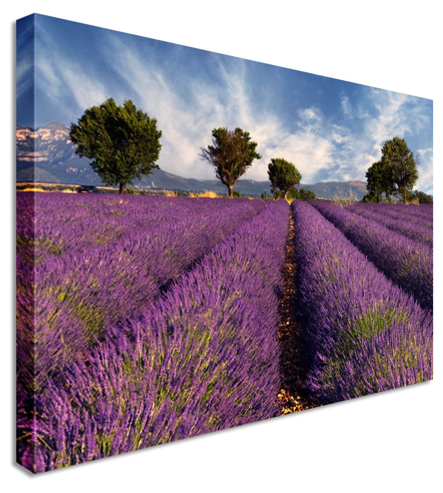 Lavender Field Floral Flower Canvas Wall Art Picture Print