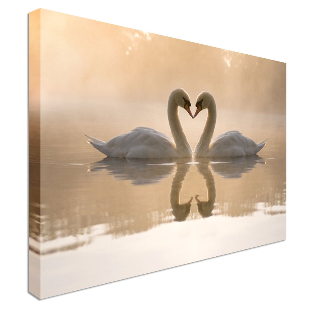 Kissing Swans on Lake Reflection Canvas Wall Art Picture Print