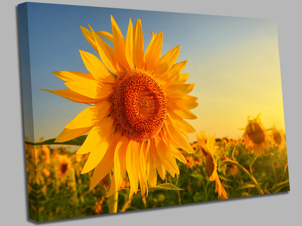 Sunflower Smile Canvas Wall Art Picture Print