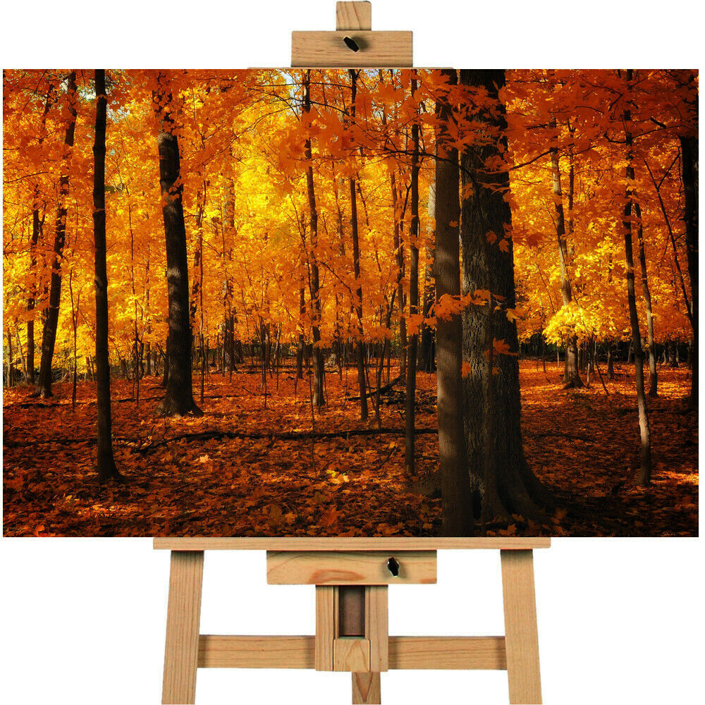 ORANGE FOREST Forrest Canvas  Canvas Print Wall Art