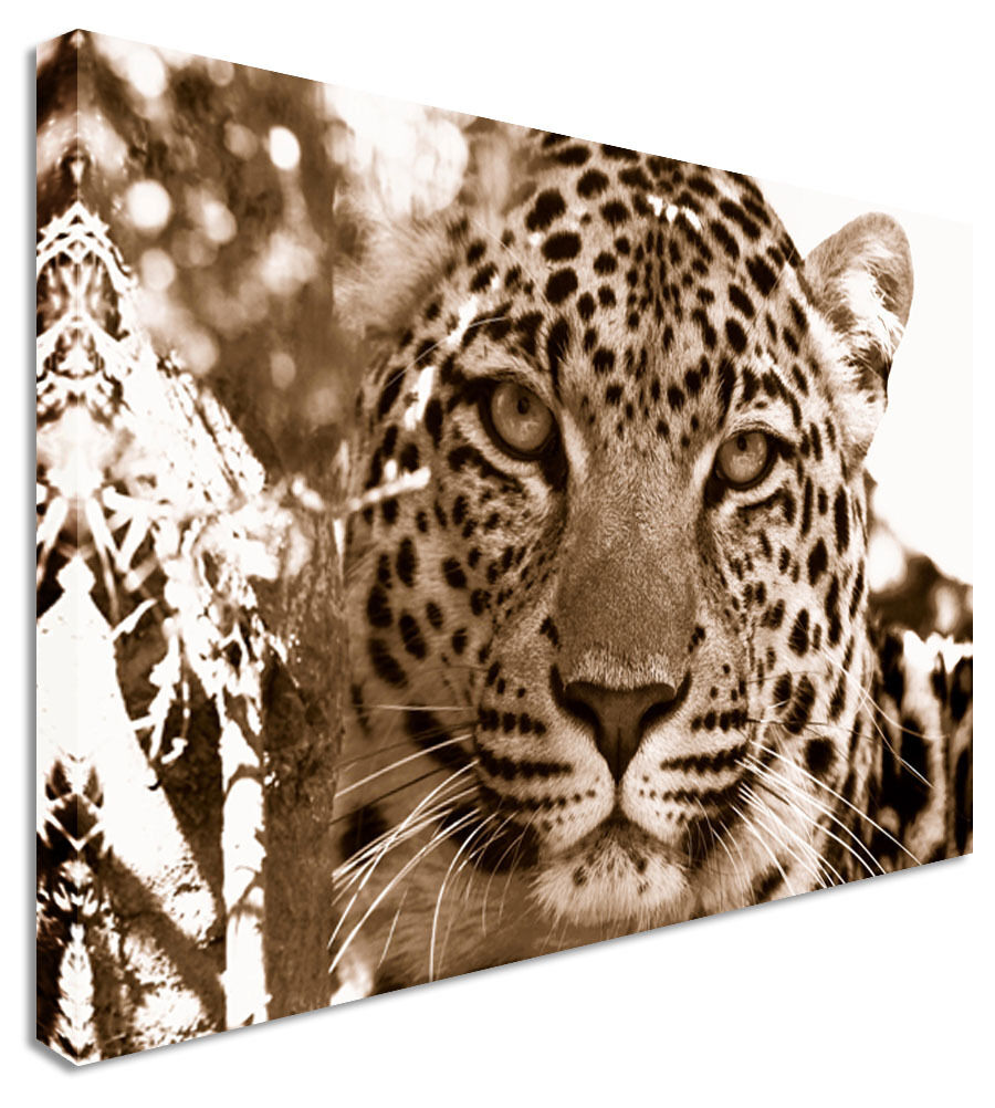 Leopard Waiting For Dinner Canvas Wall Art Picture Print
