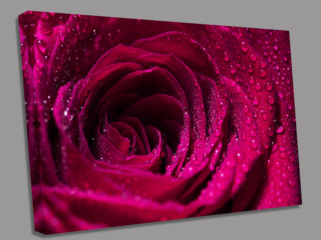 Fushia Red Rose Canvas Wall Art Picture Print