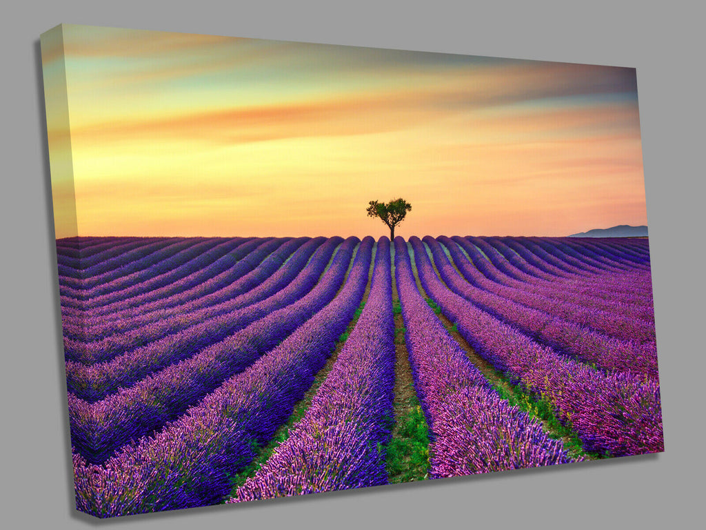 Lavender Fields Yellow Sunset Canvas Wall Art Picture Print