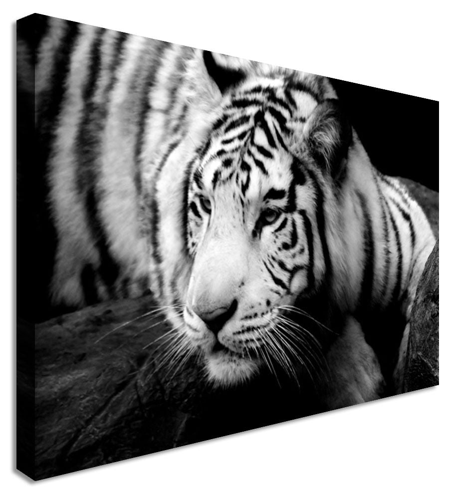 Animal Chill Tiger B&W Canvas Wall Art Picture Print