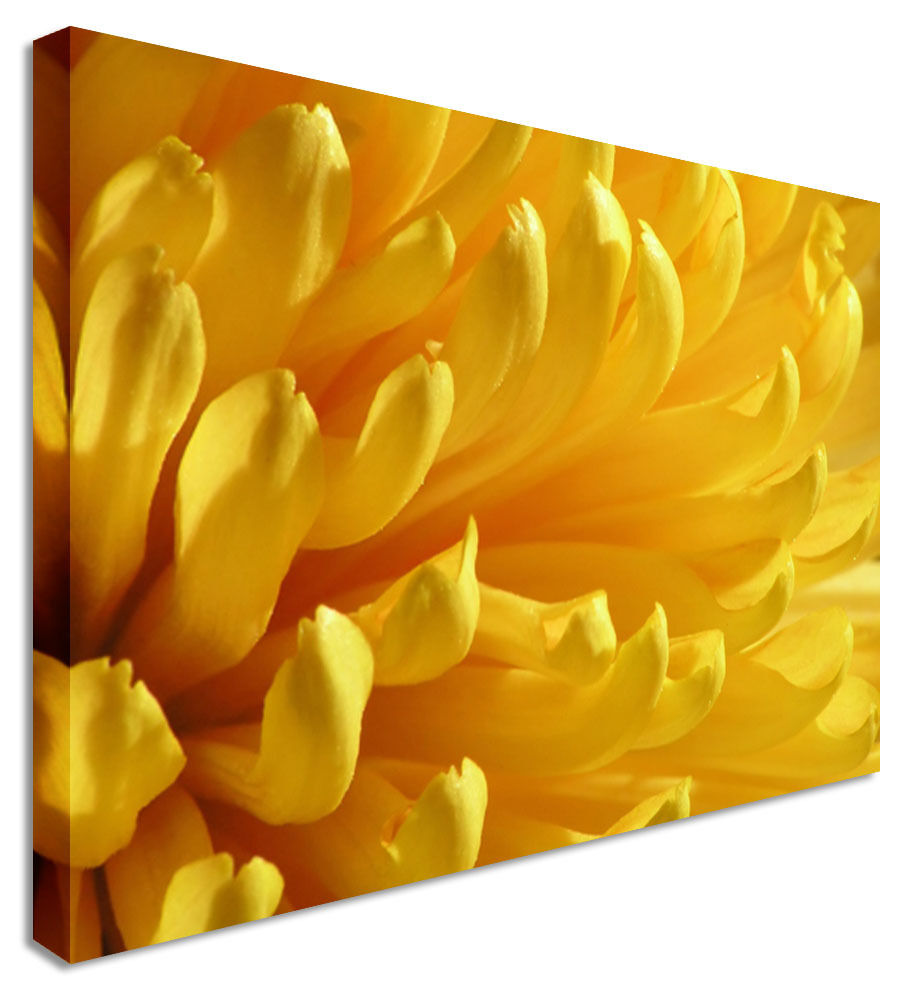DAHLIA Yellow Petals - Floral Flower Canvas Wall Art Picture Print