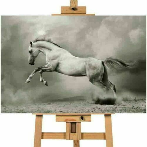 Running Stallion Horse Black and White Picture Canvas Art Wall Print