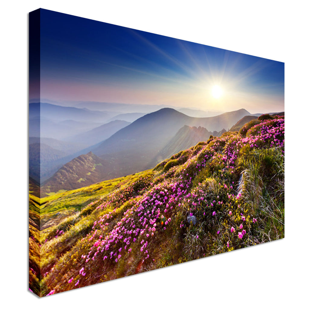 Rhododendron flowers on summer mountain Canvas Wall Art Picture Print