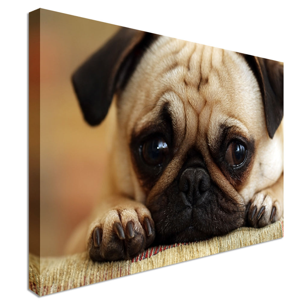 Puppy Pug Sad Eyes Canvas Wall Art Picture Print